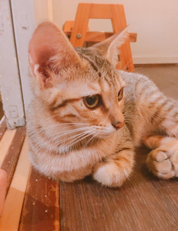 又再次光臨浪浪別哭! 二樓的貓咪也超可愛超乖~