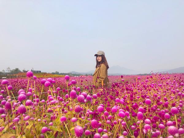 #首爾景點 #夢幻花海 這應該是近期看過最狂的花海了!!! 是我最愛的粉紅色 ❤️ 京畿道楊州的Na