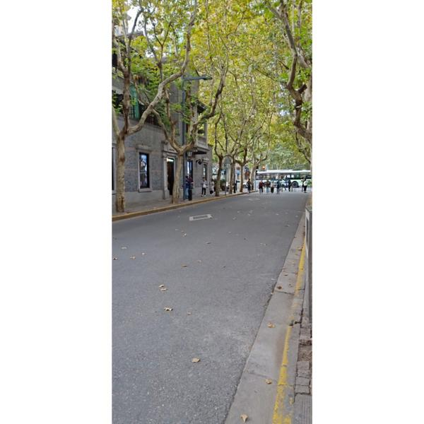 在上海的街道很舒服 除了現在天氣很冷早晚溫差大之外 風滿冷的😄 如果在春天 走在這滿滿都是樹的街道
