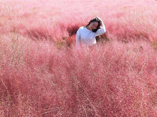 粉粉的粉黛亂子草  今年終於圓夢get💓  #韓國#天空公園