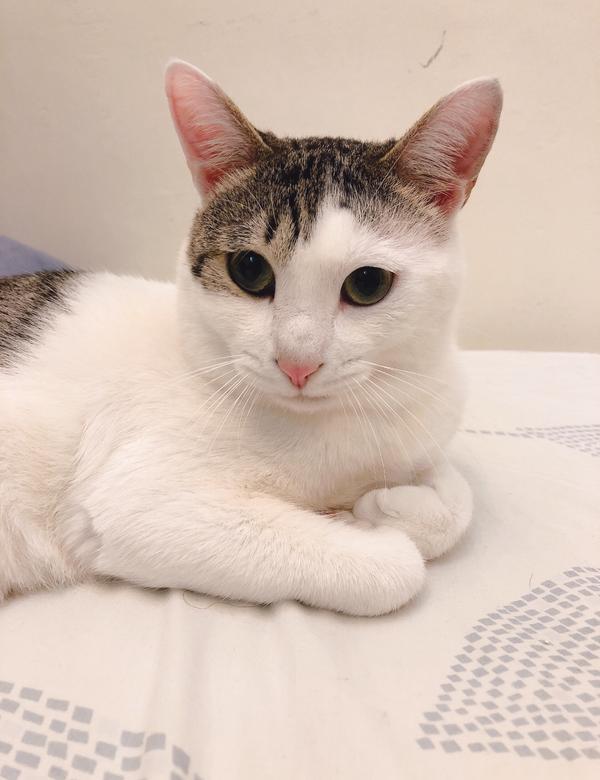 如何慵懶的睡午覺🐈萌到奴才心大噴發啊~💕  #貓咪 #ねこ #睡覺