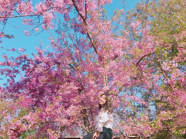 三月除了去武陵追櫻花 也要一起去拉拉山恩愛恩愛一下  #桃園#拉拉山