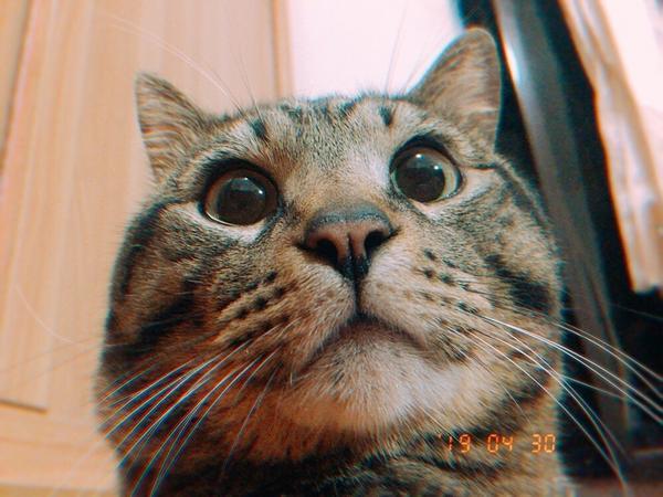 咪嚕寫真我可愛嗎 #貓咪 #貓寫真 #我愛咪嚕