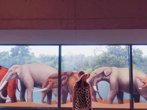 除了大象 沒人需要象牙 🦕🐘🦖🦏 #阿比去哪兒#台南景點#左鎮化石園區#愛拍照#Taiwan