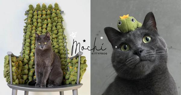 童心未泯超可愛,擁有六十隻青蛙玩具的貓咪你看過嗎?