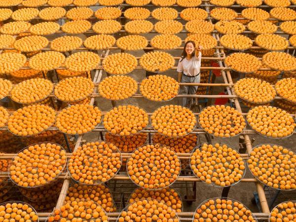 新竹 | 味衛佳柿餅觀光農場萬聖節 沒橘橘的南瓜應景 只好放橘橘的柿子 來~喂你吃柿餅  因為扮成小