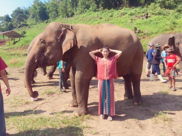參加志工體驗營是這次來清邁最期待的事❤️ 大象們都是從傷害中被拯救出來的生命  來到這裡都被照顧得很