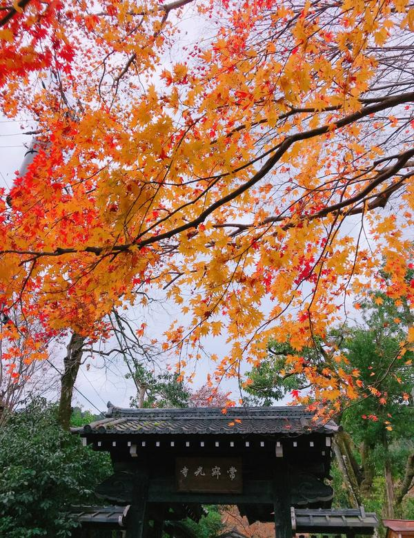 日本。京都。景點 | 常寂光寺🍁紅葉連線📍常寂光寺 🍁紅葉期間📍11月下旬-12月上旬 隨便