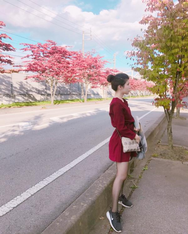 @輕井澤隨便路邊就是整排盛開的櫻花🌸 好美好喜歡呀!!!