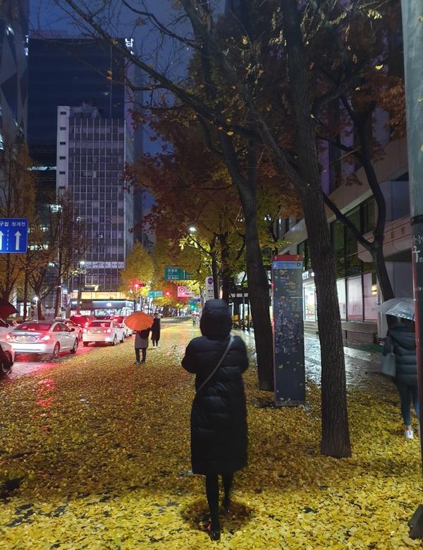 乙支路入口站-滿滿銀杏海韓國的秋天接近尾聲,原本以為這次看不到銀杏。 但居然在乙支路入口站附近遇到了