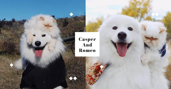 誰說貓貓狗狗一定不合,Casper and Romeo,一起長大的約定就是這麼真心!