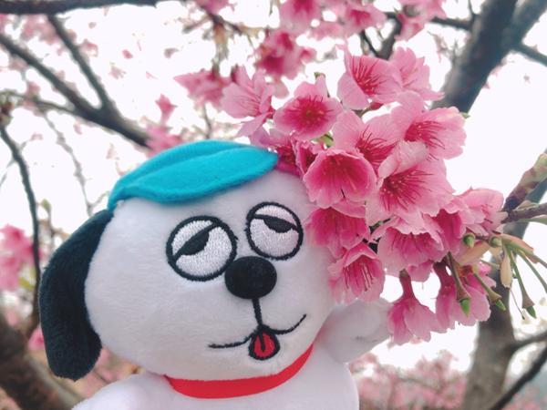 遛狗看櫻花