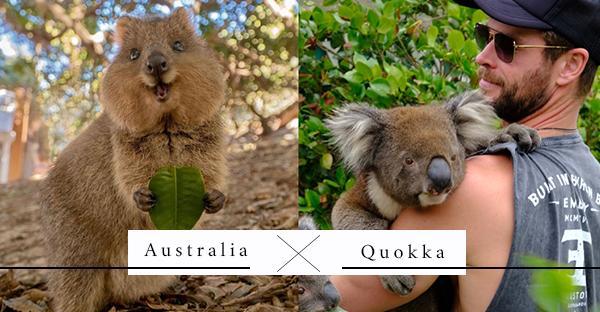 世界上最快樂的動物「Quokka短尾矮袋鼠」,連雷神索爾都被牠的天使笑容給征服!