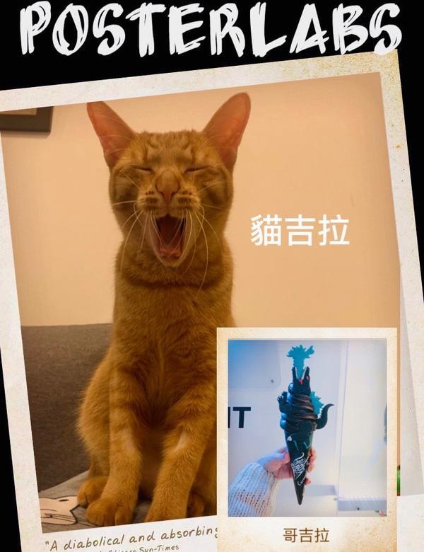 我家的貓吉拉拍的好傳神⋯哥吉拉