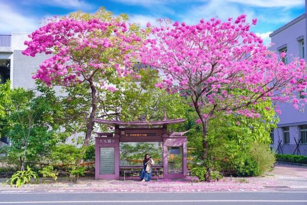 台南景點—大光國小,台南最美公車站! 昨天成功解鎖🔓「台南最美公車站🚌」~ 這麼美麗的街景�