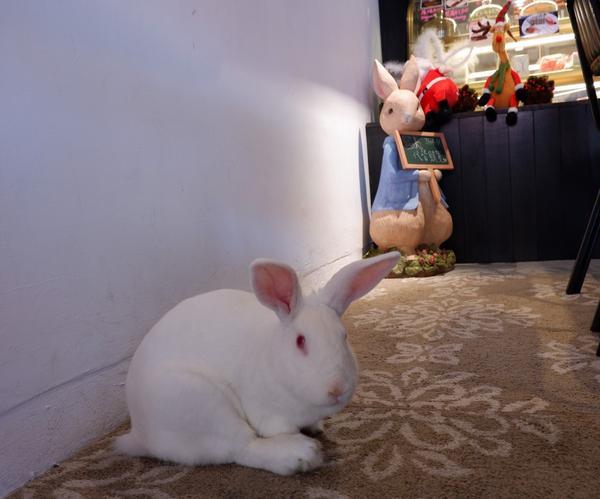 【台北  大安區六張犁早午餐推薦】兔Dream【一份可以隨心所欲想吃什麼點什麼的早午餐可頌與起司的搭