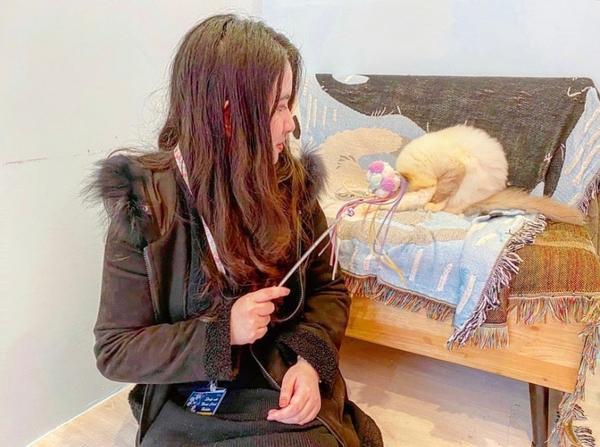 月亮糖糖喵樂園貓咪真的超可愛🥺💜 #新北 #淡水 #新北景點 #淡水景點 #月亮糖糖喵樂園 #貓