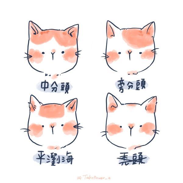 貓咪常見的四種髮型 貓咪的髮型✨✨ 我很喜歡看路邊的貓咪花紋來取名 最喜歡的就是中分頭! 當然還有遇
