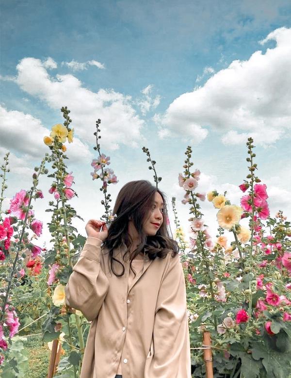 台北 · 花博公園原本很開心的想說花博公園有蜀葵花可以拍 但還是無法媲美南部的蜀葵花 沒有那麼茂密
