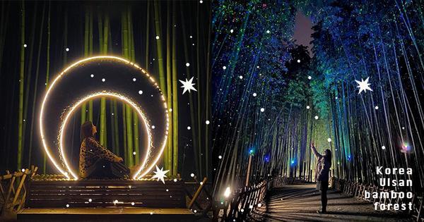 【韓國】超夢幻「銀河系竹林」!免費約會景點來這太浪漫,閃爍點點星光彷彿滿天星斗觸手可及!