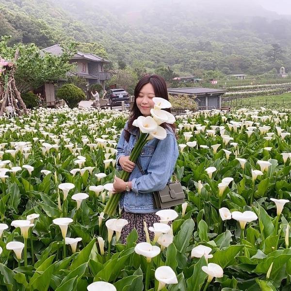 ☛【台北】名陽匍休閒農莊 │竹子湖最夢幻海芋田休閒農莊的位置很好找Google搜尋名陽匍休閒農莊就可