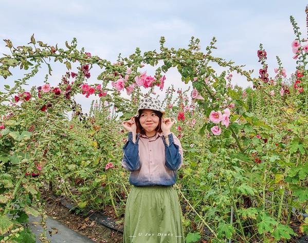 /Joy要走走/ 最後的蜀葵花每賞一次蜀葵花就提醒著我們又過了一年原來賞花是一件這麼具有儀式感的浪漫