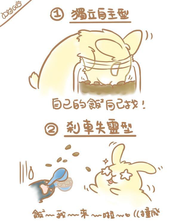 兔寶吃飯飯類型  ▌來分享一下小朋友們都是如何吃飯的吧XD 這是我們家常常上演的戲碼~  ❶自己找飯
