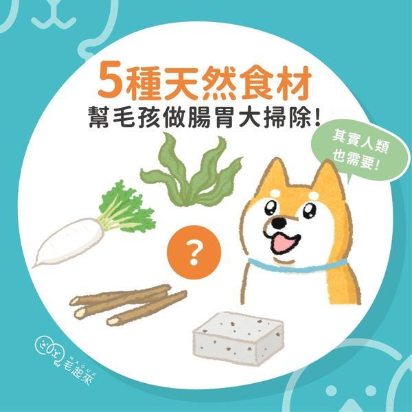 5種天然食材 幫毛孩做腸胃大掃除!【#先追毛起來IG】隨時發摟毛孩冷知識:www.ins