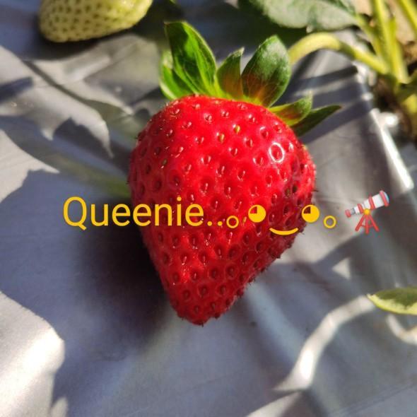Queenie。◕‿◕。🔭
