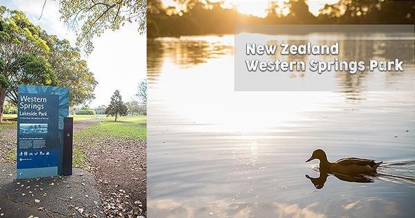 【紐西蘭】奧克蘭 Auckland | 西泉公園 Western Springs Park在奧克蘭&