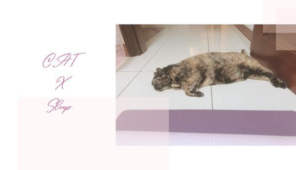 🔸玳瑁花搗蛋日記 |#2||不矜持小姐姐睡姿教學大公開||不知道大家對貓咪的睡姿認識多少~最常見如