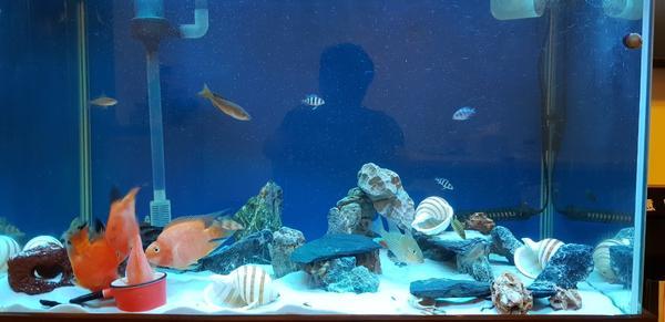 打造全新的坦干伊喀湖生態模擬缸底沙:培菌沙(不會髒的底沙)非珊瑚沙,蝦皮有賣,3尺缸使用18公斤,一