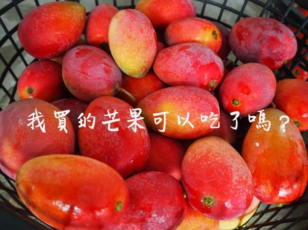 蝦密,芒果不是買了剛摘下的就能吃?時節進入到6月,也是臺南山區芒果盛產的季節,炎熱的夏天吃個冰涼的芒
