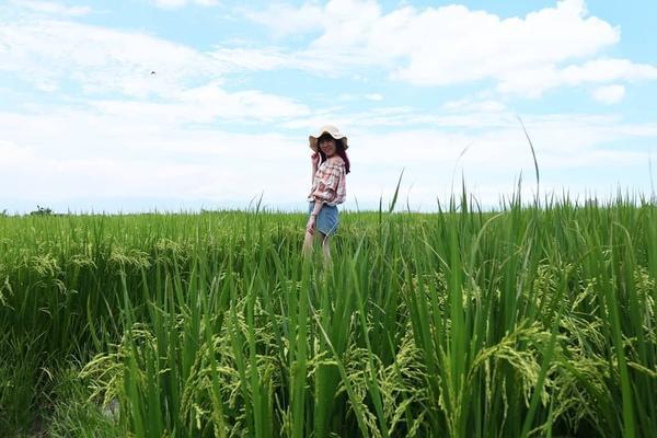(小布旅行日記)宜蘭伯朗大道那天離午餐預約時間還有一段時間臨時到附近景點走走冬山伯朗大道廣闊綠綠的稻