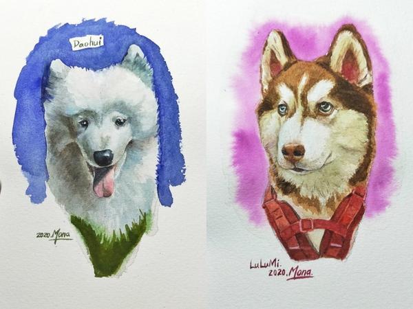 水彩寵物頭像//雪橇犬篇//雪橇犬小知識最廣為人知的犬種就屬哈士奇跟薩摩耶了!雪橇犬其實還有很多種!