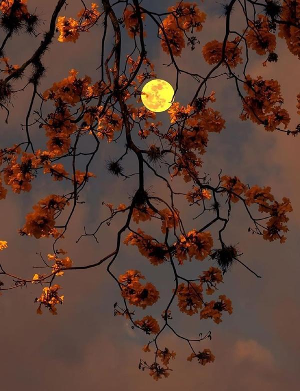 手机桌布✨月亮代表我的心🌕照亮了我的思念💛