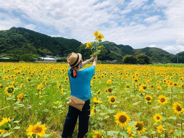 六月就滿開!日本高知縣早開向日葵「土佐市出間向日葵田」轉眼間今年已來到了六月,世界各地的風景沒有隨著