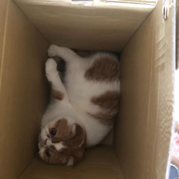 跳進紙箱出不來