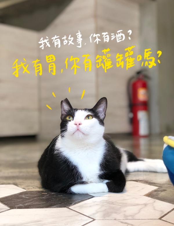撩人喵 `ᴥ´ 罐罐!罐罐!我的胃不會很大喔!一個罐罐就好~.這是一隻貓咪餐廳的咪咪胖胖的好像很好摸