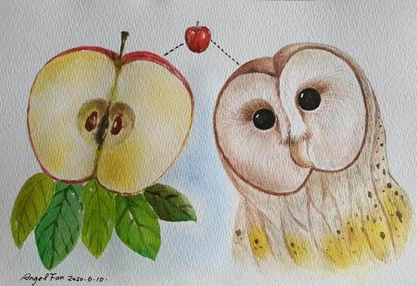 水彩一顆蘋果🍎 穀倉貓頭鷹的臉像蘋果切面一樣😂 1/2+1/2=1