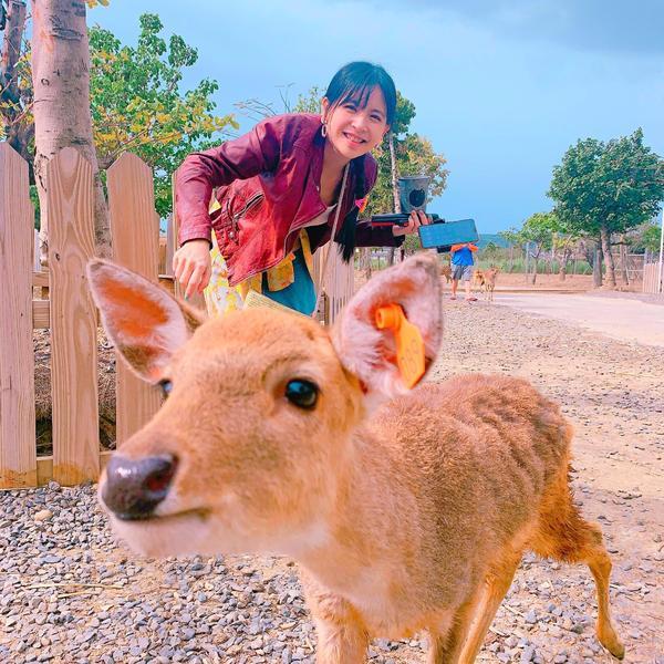 🍄流浪到恆春🐐鹿境梅花鹿生態園區三年前就已經獨自去鹿境玩過了,便宜又好玩,小鹿兒還很親人除了遠到
