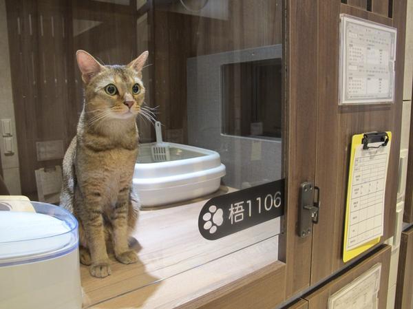 貓咪五星旅館開箱體驗🔥大家敲碗已久外宿文終於來了🙌🏻這次帶著查理到新竹旅遊不是所有飯店都是寵物
