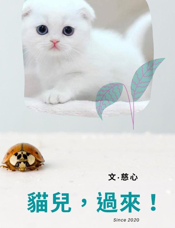 【小說連載】貓兒!過來!Ep43~Ep45&nbsp