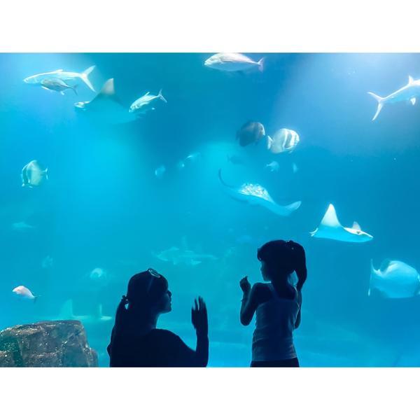 花蓮-遠雄海洋公園來花蓮不可缺少的海洋公園行程 在這裡真的可以待一整天玩一整天 看了海豚與海獅的表演