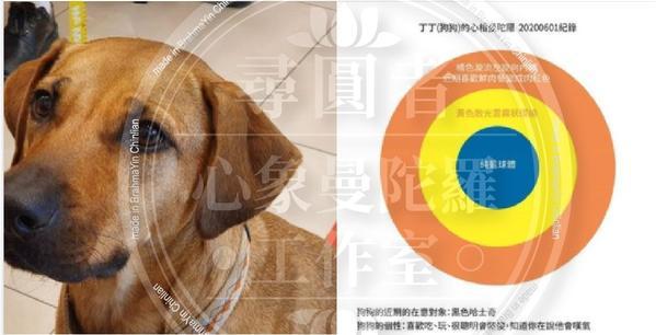 寵物心象曼陀羅解析分享-2今天的曼陀羅案例呢~是一隻叫做丁丁的小土狗~!牠的主人丁丁媽特地要我也幫她