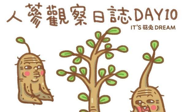 【人蔘觀察日誌】DAY-10成長#人蔘觀察日誌#人蔘#菇兔#圖文