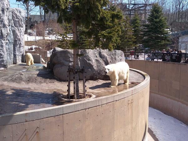動物寫真大特輯 - [日本]北海道旭川動物園我的散步版圖越來越廣了!到了北海道還是要去動物園散步,北