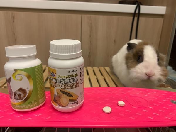 《寵物》讓兔兔「盲測」不同品牌的木瓜酵素😂會發生什麼事呢?前幾天朋友買了「綠色」那款木瓜酵素給自家