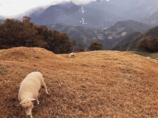 冬天的清境早安 💜 冬天的清境 #青青草原 #清境