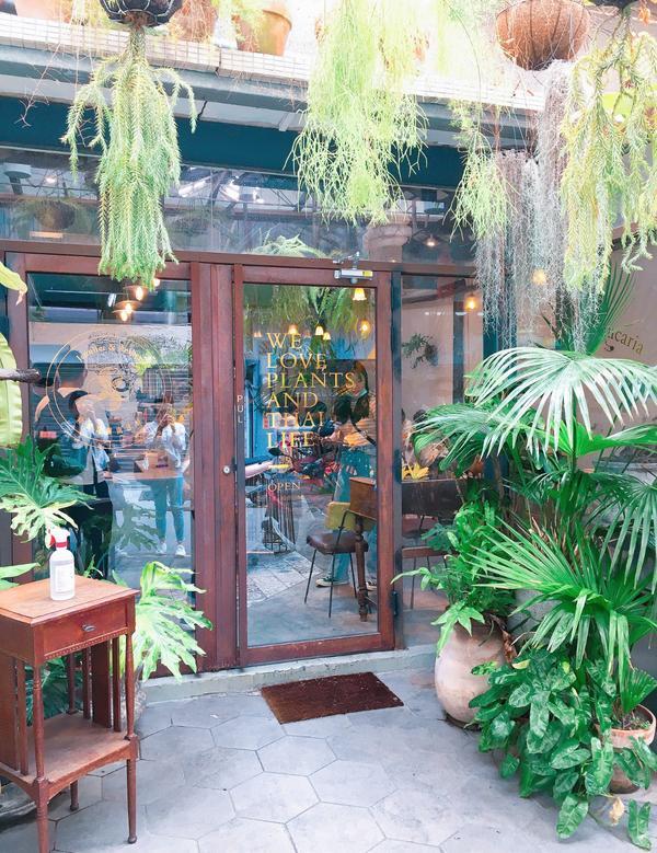 ◤ 台南 ◢ 泰美味叢林系料理 ◎ 珍妮花與南洋杉 Jennifer&Araucaria
